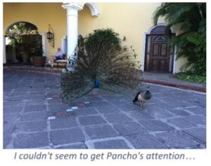 Pancho - Casa Velas - Mexico